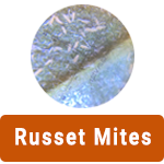 learn-more-about-russet-mites.png